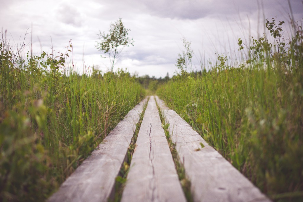 acokGiGHRWexNTXOFQw8_Store Mosse Nationalpark-10